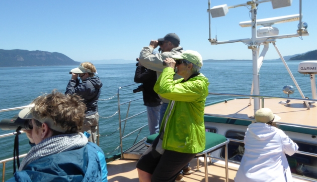 san-juan-cruises-bird-watching-cruise-bird-watchers